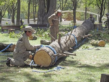 Especies nativas llenarán vacío de árboles talados