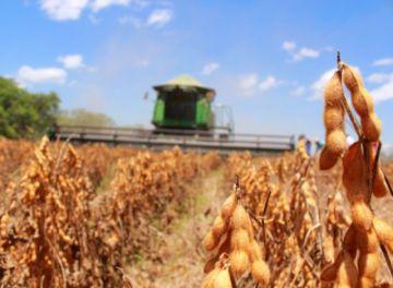 Evo anuncia aumento de cupo de exportación de soya