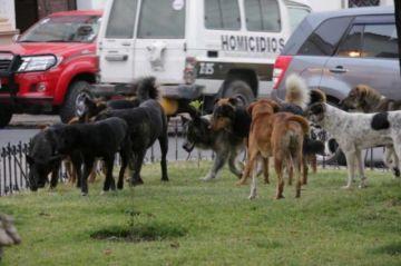 Reportan cerca de 1.000 mordeduras de canes
