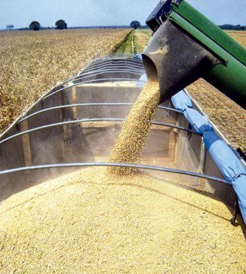 El cupo para la exportación de soya sube a 60%