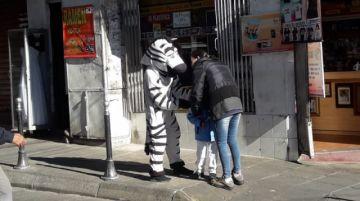 Las cebras vuelven a las calles de Sucre