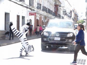 """Diez """"cebras"""" retornan  a las calles de la Capital"""