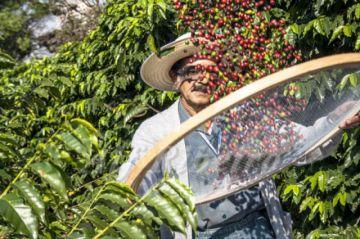 Brasil bate récord de exportaciones de café
