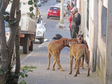 En invierno los  canes se tornan  más violentos