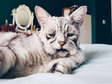 """Toby, el gatito """"más triste del mundo"""" por una extraña enfermedad"""