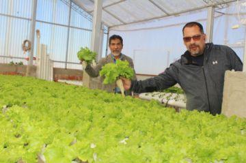 Sucre: ESA produce una lechuga limpia, sana y ecológica en cuatro variedades