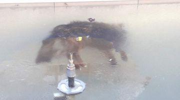 Un perrito termina congelado dentro de una fuente de agua en Potosí