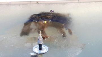 Perro en Potosí termina congelado en una fuente