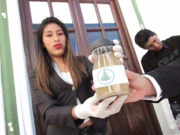Jarabes de jengibre y pino para enfrentar el resfrío