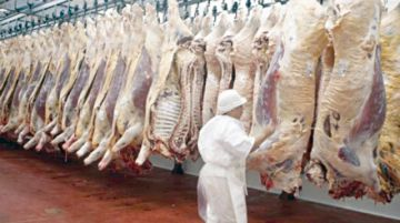 Frigor y Fridosa  exportarán carne  hasta China