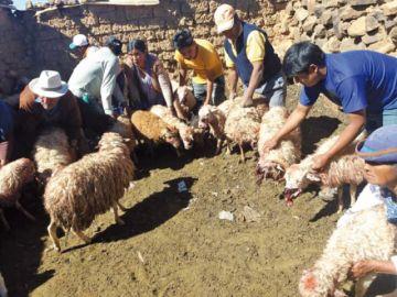 Pitbulls siembran terror  en barrio de Lajastambo