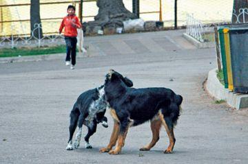 Perros provocan lesiones en niños de 1 a 13 años