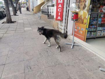 En Sucre hay un perro por cada tres personas