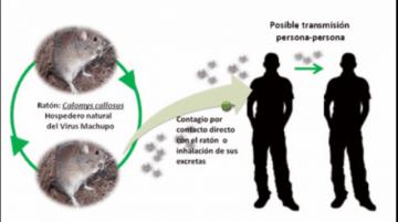 OPS se refiere a la fiebre hemorrágica por arenavirus en Bolivia