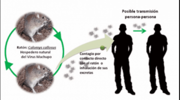 La OPS emite alerta epidemiológica de fiebre hemorrágica por Arenavirus en Bolivia