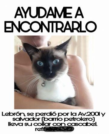 Alertan sobre extorsión por mascotas perdidas