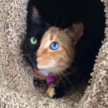 Conoce a los gatos más famosos y tiernos de internet