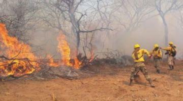 Roboré en emergencia: Incendios devoran 35 mil hectáreas