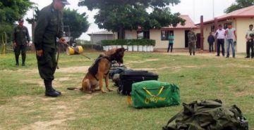 Canes antidroga detectan 109 kilos de droga