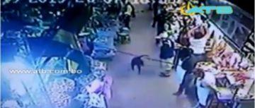 Arrestan a una joven y su madre por agredir a un perro