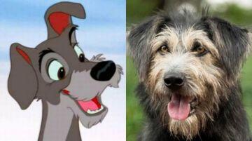 """Disney halla en una perrera a su estrella de """"La Dama y el Vagabundo"""""""