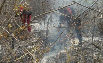 Incendios arrasan con más de 700 mil hectáreas en la Chiquitanía