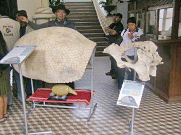 Presentarán el informe  de gliptodonte yampareño