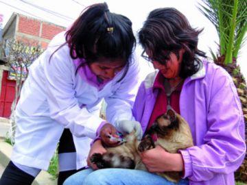 Mascotas: ¿Qué tomar en cuenta antes de la vacuna?