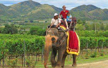 Turismo con animales: crueldad por una foto