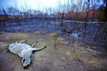 Brasil intensifica el combate contra el fuego en la Amazonía
