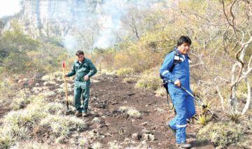Ambientalistas estiman pérdida de 1,8 millones de hectáreas por incendios