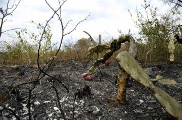 Incendios ponen en alto riesgo de etnocidio a indígenas en aislamiento voluntario