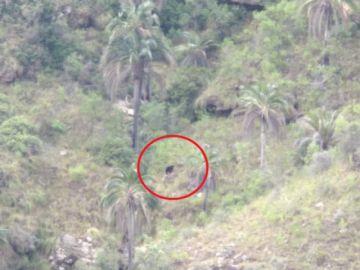 Oso jucumari es visto en El Palmar