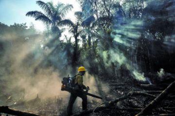 Incendios afectan al 44% del estado de Amazonas