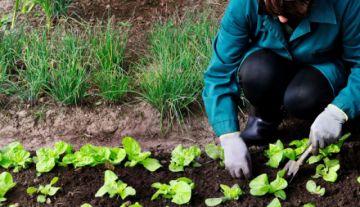 """La nueva comida ecológica: carne, leche y huevos """"verdes"""""""