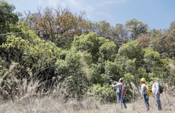 Devastación de los bosques aumenta de forma dramática