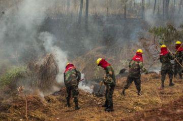 Incendios: Diputada presenta querella contra el ministro Ortuño