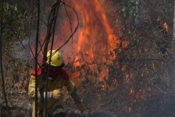 Temen que incendio avance al Parque Noel Kempff Mercado