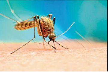Reportan el primer caso sospechoso de dengue