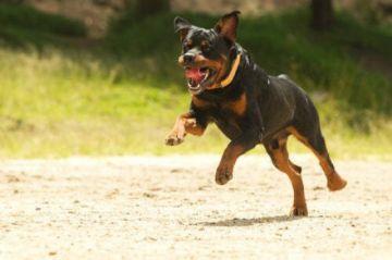 Imputan por lesiones gravísimas a dueño de can que mordió a niño