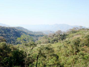 El Iñao alberga la semilla para el bosque Chiquitano