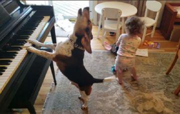 Un bebé baila al ritmo del piano que toca un perro