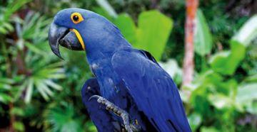 Biólogo: Es incierto el futuro de las aves de la Chiquitanía
