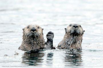 The Comedy Wildlife: El premioa la fotografía más divertida