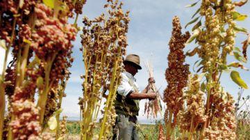 FMI: Bolivia bajará crecimiento y el mundo perderá su impulso