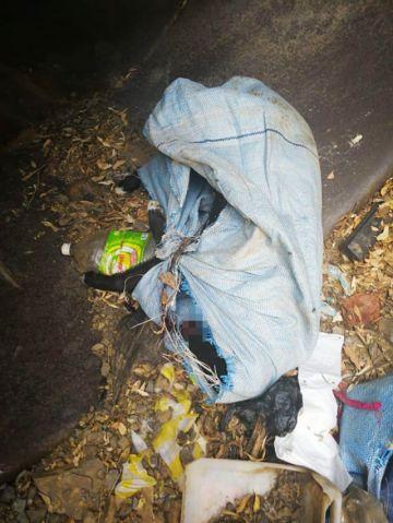Denuncian sacrificio de animales en La Calancha