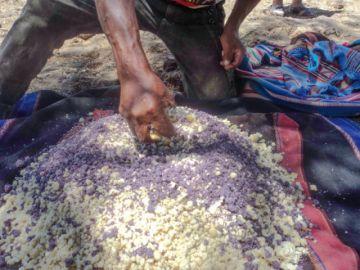 El  waqi: Ritual de la siembra del maíz