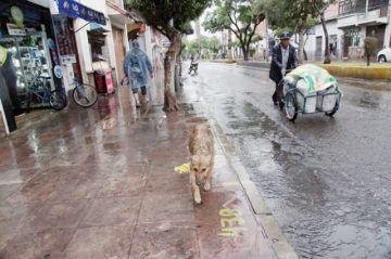 Las lluvias se mantienen dentro del rango previsto