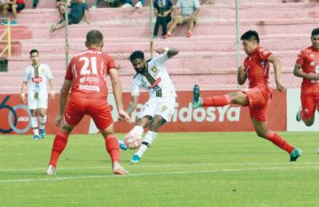Tigre indomable