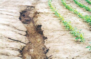 Bolivia, entre deforestación y degradación de sus suelos